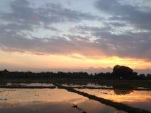 Aftonsolnedgång på cornfieldrisfältfältet December 2016 Thailand #001 Royaltyfri Foto
