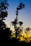 aftontrees Arkivfoto