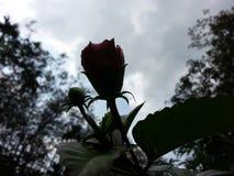AftonWada för natur verklig lös blomma av byn Royaltyfria Foton