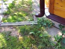 Afvoerkanaalrooster in de tuin Royalty-vrije Stock Foto's