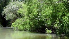 Afwijking op Tropische wildernis op de rivier stock videobeelden