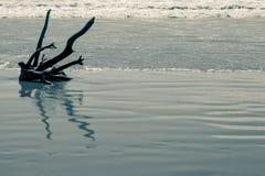 Afwijkingshout op het strand in noordelijk Italië Royalty-vrije Stock Afbeeldingen