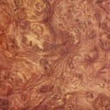Afzelia ξύλινη τέχνη υποβάθρου burl εξωτική φυσική Στοκ Φωτογραφίες
