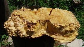 Afzelia burlträ som göras randig för bil för garnering för bildtryckinre, den exotiska trähärliga modellen för hantverk eller abs royaltyfri bild