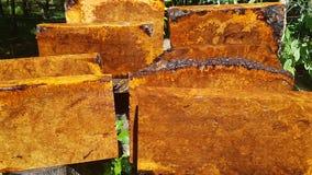 Afzelia burlträ som göras randig för bil för garnering för bildtryckinre, den exotiska trähärliga modellen för hantverk eller abs fotografering för bildbyråer
