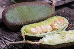 Afzelia xylocarpa Craib (Kurz) Zdjęcia Stock