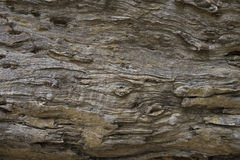 Afzelia xylocarpa (Kurz) Craib. Texture of old tree trunk in closeup Royalty Free Stock Photos