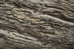 Afzelia xylocarpa (Kurz) Craib. Texture of old tree trunk in closeup Royalty Free Stock Images