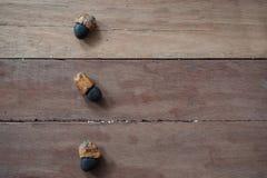 Afzelia xylocarpa ziarno Obrazy Stock