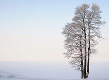 Afzonderlijk bevindende boom dichtbij het meer in de winter Royalty-vrije Stock Afbeeldingen