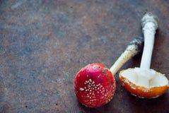 Agárico de la mosca de los champiñón Fotografía de archivo libre de regalías