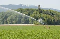 Ag Sprinkler Stock Photo