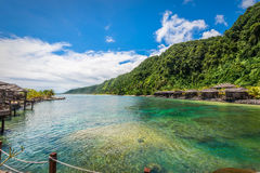 Agaertsader, Samoa Stock Afbeelding