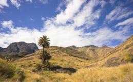 Agaete, Gran Canaria Obraz Royalty Free