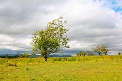 agains chmur osamotniony drzewny biel Zdjęcie Royalty Free