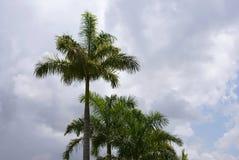 agains chmurni palmowi rzędu nieba drzewa Zdjęcia Royalty Free
