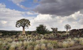 Agains d'arbres de tremblement le ciel nuageux Photographie stock libre de droits