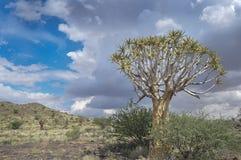 Agains d'arbres de tremblement le ciel nuageux Photo libre de droits