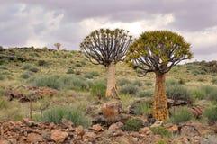 Agains degli alberi del fremito il cielo nuvoloso Fotografia Stock