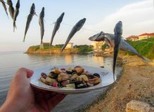 Mackerel Caranx trachurus of fishing line and seafood salad. Against a backdrop of sea landscape in Vasiliko - the Old Quarter of Tsarevo, Bulgaria stock photos