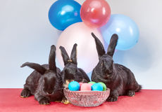 Against the background of balloons are lie bunnies near Easter eggs Royalty Free Stock Photo