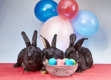 Against the background of balloons are lie bunnies near Easter eggs Stock Photography