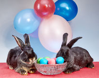 Against the background of balloons the rabbits near a vase with Easter eggs Stock Photo
