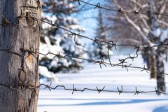 Against the background of the forest area is a pillar on which the barbed wire. The winter border of Russia stock images