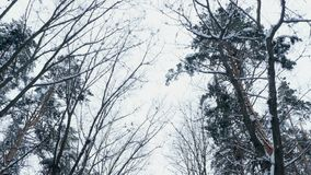 Against the background of the winter sky, there are branches of trees in the snow, a view from below upwards, in motion.  stock video footage