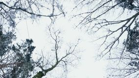 Against the background of the winter sky, there are branches of trees in the snow, a view from below upwards, in motion.  stock footage