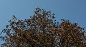 against sky trees απλό όμορφο φθινόπωρο υποβάθρου στοκ φωτογραφία με δικαίωμα ελεύθερης χρήσης