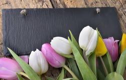 Againt тюльпанов шифер стоковое изображение rf