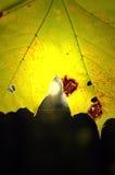 Againts кленового листа солнце Стоковые Изображения