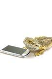 Agama jaszczurka i mądrze telefon pionowo Obraz Stock