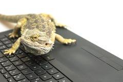 Agama jaszczurka na notatniku Zdjęcie Royalty Free