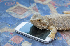 Agama lizard lying on the smart phone Royalty Free Stock Photography