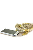 Agama lizard and the smart phone. Vertically. Stock Image
