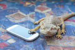 Agama z mądrze telefonem na kanapie Obraz Stock