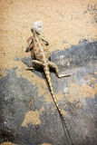 Agame de steppe (sanguinolentus de Trapelus) photos libres de droits