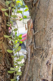 Agamidae, lizard on tree. Conceal in nature stock photo