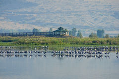 Agamon Hula bird refuge Royalty Free Stock Photography