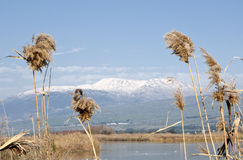 Agamon Hula bird refuge, Hula Valley, Israel Royalty Free Stock Photography