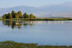 Agamon Hula bird refuge Royalty Free Stock Images