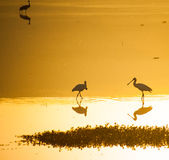Agamon Hula bird refuge Stock Images