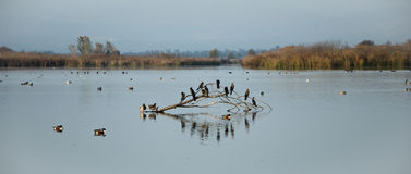 Agamon Hula. The Agamon Hula Park bird-watching sites and observe migrating courting and nesting birds Stock Image