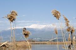 Agamon Hula ptasi schronienie, Hula dolina, Izrael Fotografia Royalty Free