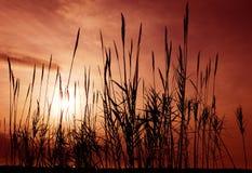 aganst czerwony płoch niebo Fotografia Stock