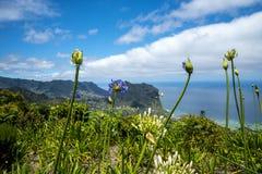 Agapantów kwiaty i Penha De à  guia Eagle skała lub, madera, Portugalia Zdjęcie Royalty Free