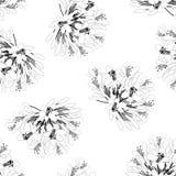 Agapanthus Flower Outline Seamless on White Background. Vector Illustration.  vector illustration