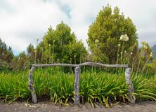 Agapanthus and wooden barrier Royalty Free Stock Photography